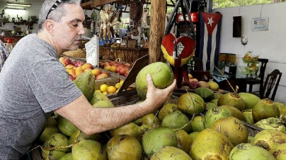 Tips for Buying Coconut