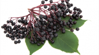 Elderberry Benefits: Why Millions Use Them For Better Winter Health